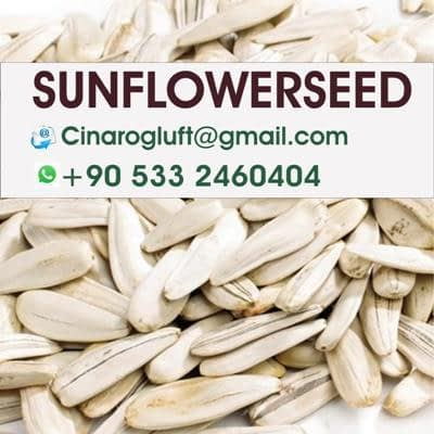 buy roasted sunflower seeds