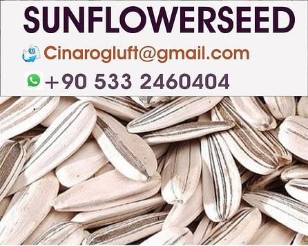 sunflower seeds roasted