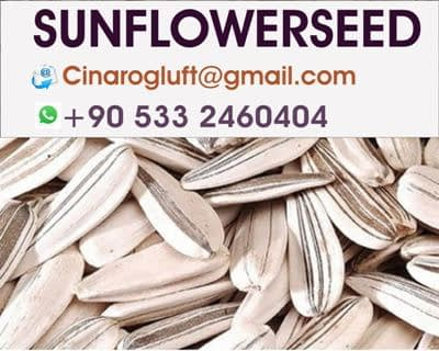 roasted sunflower seeds wholesale