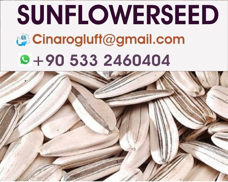 sunflower seed Turkey white