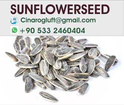 roasted sunflower seeds no salt