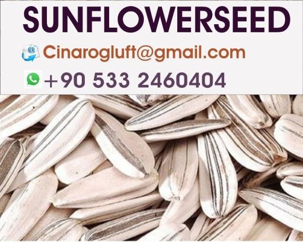 Turkey Sunflower Seeds