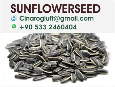 roasted sunflower seeds with shell